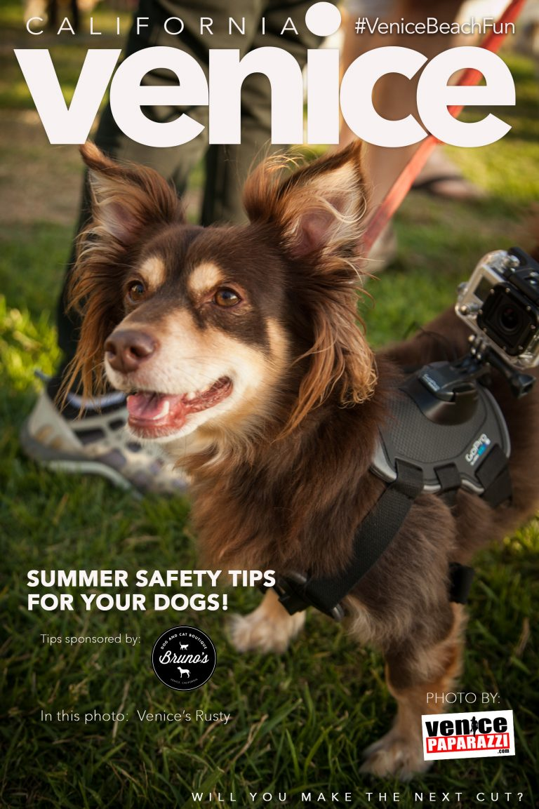 We all love our dogs! So, here are a few summer safety tips
